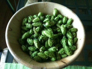 First Hop Harvest